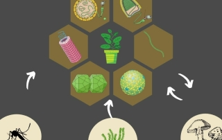 A Origem dos Vírus de Plantas (1)